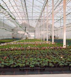Serres Pussemier - Buzet (Pont-à-Celles) - Production de plantes