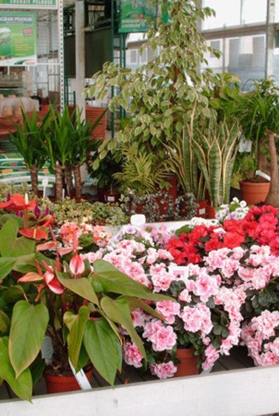 Serres Pussemier - plantes intérieures