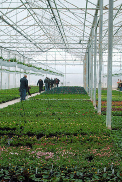 Serres Pussemier - production des plantes